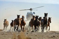 helicopter stampede(1)