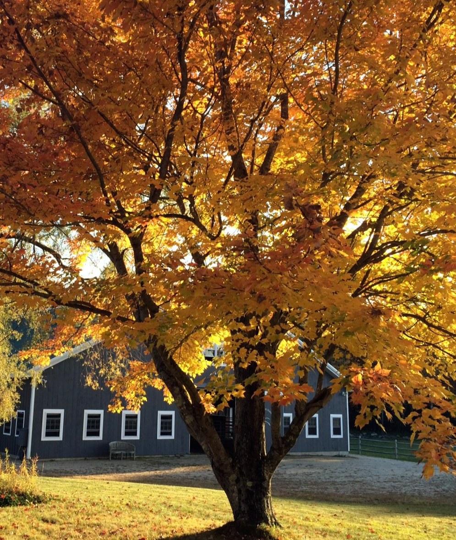 An autumn view of Barbara's Maine farm