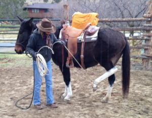 Using a rope to stay safe while getting a horse comfortable with hoof lifting