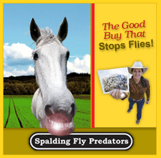Spalding-Fly-Predators