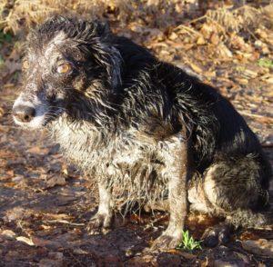 muddy-dog-by-wout-1024x768