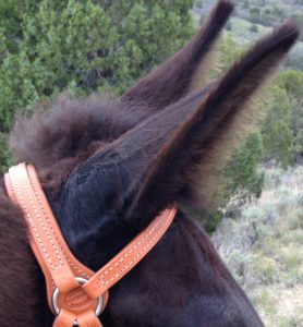 New headstall is easy on the ears.