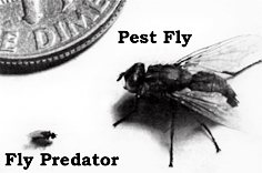 1464.just_2D00_what_2D00_are_2D00_fly_2D00_predators