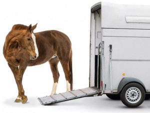 Horse Trailer Safety & To Do's